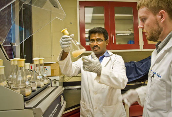 UL Lafayette researchers Ramalingam Subramaniam and Stephen Dufreche experiment with yeast