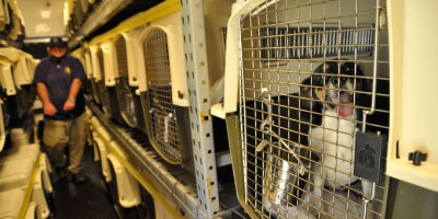 Acadiana Animal Aid is doing its part to help lower the number of animals being euthanized in the region.